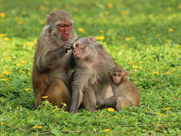 Nằm mơ thấy khỉ điềm báo hung hay cát?